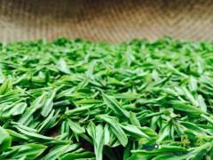 十大名茶叶的鉴别方法原来可以这么简单