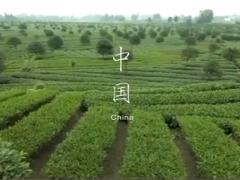 《茶》纪录典藏茶纪录
