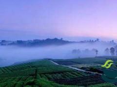 """专家支招论""""茶""""道 """"中国藏茶·健康中国""""高峰论坛在雅举行"""