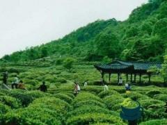 深入学习贯彻党的十九届四中全会精神和省委决策部署 推动茶产业和文化旅游融合发展