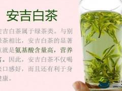 安吉白茶多少钱一斤