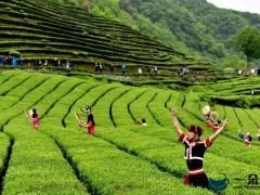 茶旅文一体,安化绿色发展步履铿锵