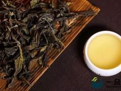 普洱茶古树黄片,你了解多少