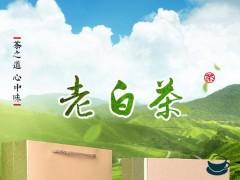 中国茶叶市场新晋黑马 九十三度白茶谱写发展新篇章