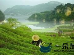 浙江新昌欲打造百亿茶产业