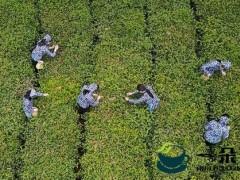 """启幕全球饮茶时代的中国力量——写在""""国际茶日""""诞生之际"""