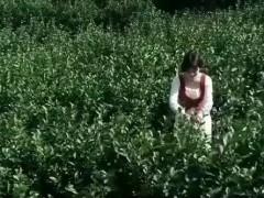 美女阿姐茶园视频精彩大片,人美茶香