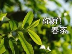 战胜疫情,2020春茶全记录