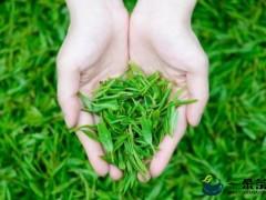茶叶可以治痢疾-茶叶的功效篇