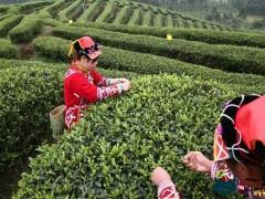 什么茶叶好喝上档次 中国十大名茶最新排名来了