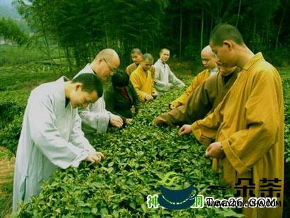 茶与佛教的千年奇缘