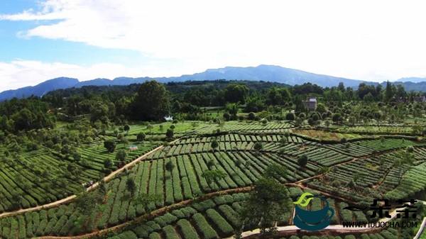 雅安雨城区魏家村:走茶旅融合发展之路 美了乡村富了农家
