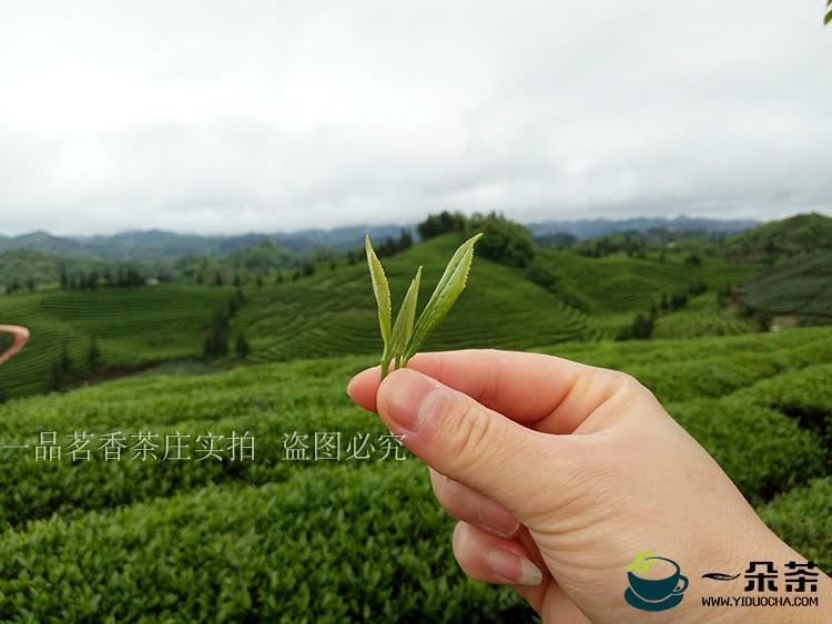 """【问答贵州茶】何以坚持""""干净茶""""之路"""