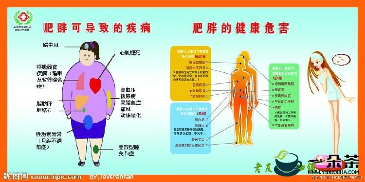 降脂、减肥、软化人体血管、预防心血管疾病