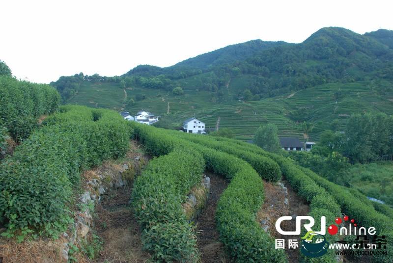 杭州市西湖龙井茶基地保护条例
