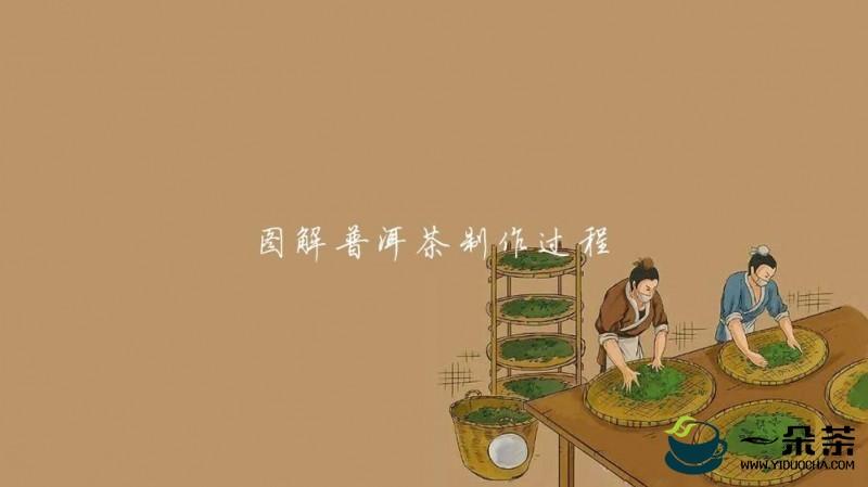 普洱茶制作工艺竟然如此神秘