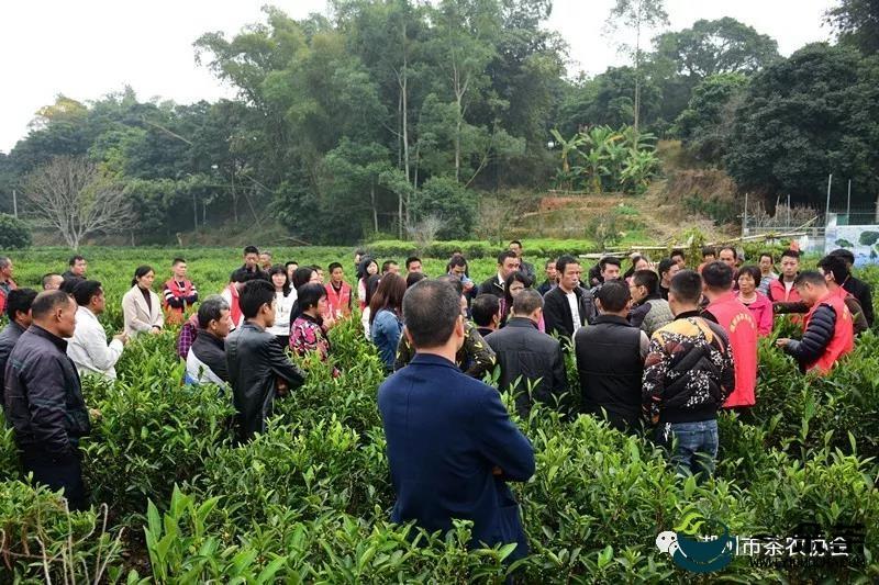 """南涧县生态茶园管护培训助推""""一县一业""""茶产业发展"""